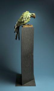 macaw-3