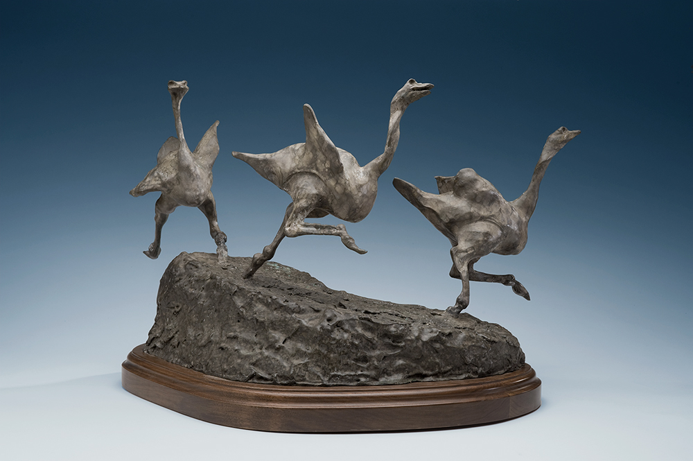 ostriches-1